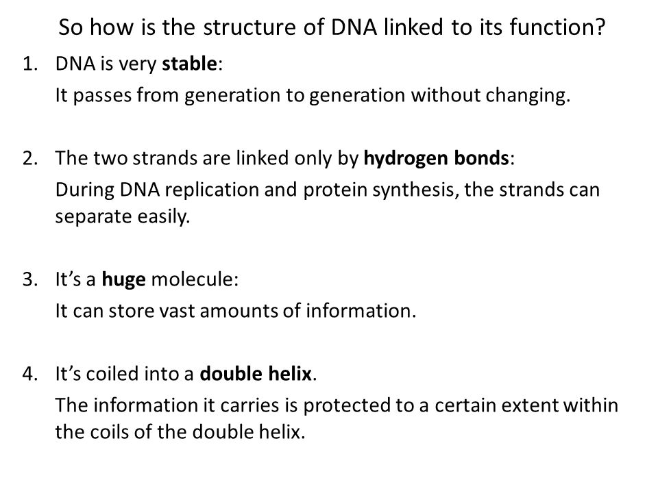 Recap: The Triplet Code If each single base in DNA coded for an amino acid, how many different amino acids would make up proteins.