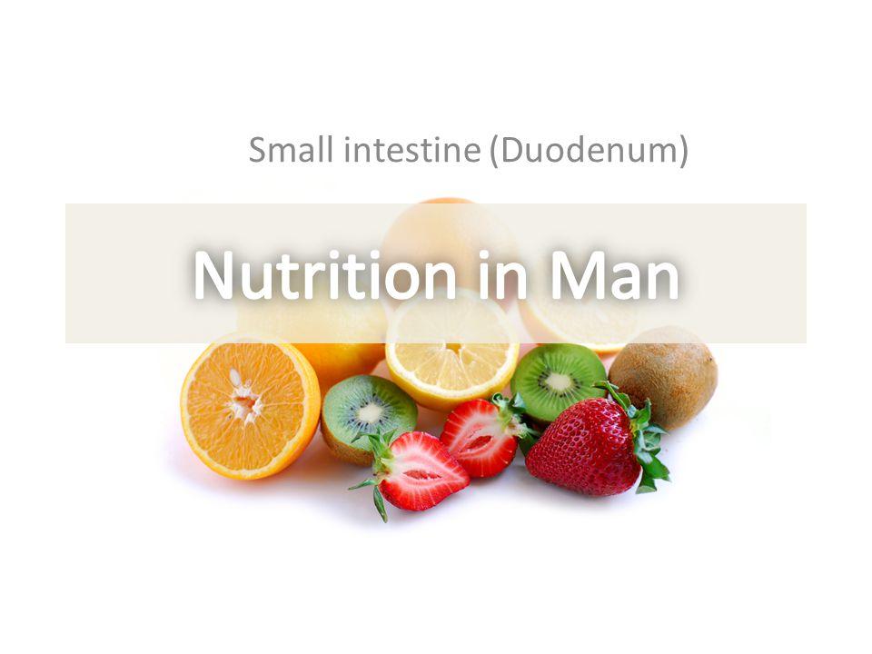 Small intestine (Duodenum)