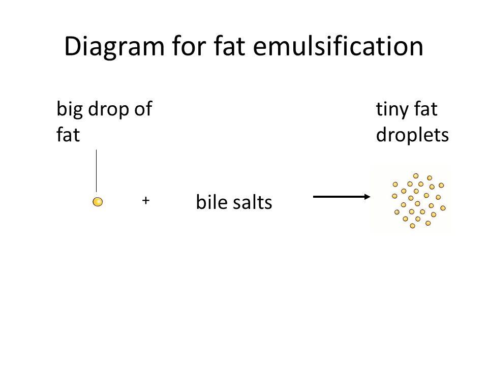 Diagram for fat emulsification big drop of fat bile salts tiny fat droplets +