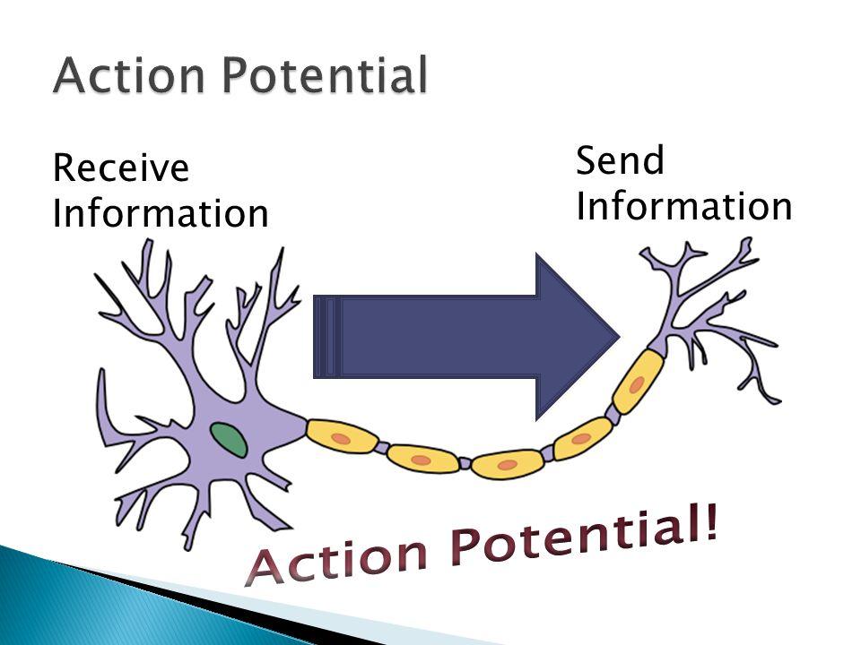 Receive Information Send Information