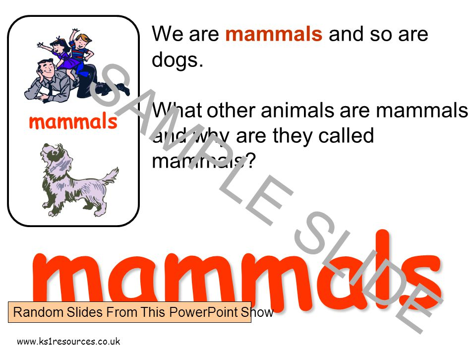 www.ks1resources.co.uk mammals We are mammals and so are dogs.