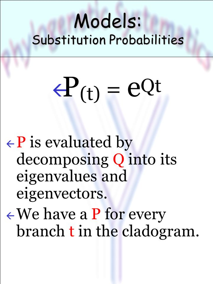 Models: Substitution Probabilities ß P (t) = e Qt ß P is evaluated by decomposing Q into its eigenvalues and eigenvectors.