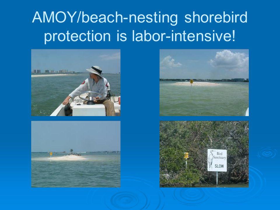 AMOY/beach-nesting shorebird protection is labor-intensive!
