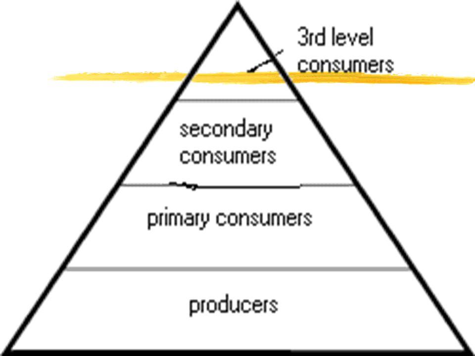 Producers Primary consumer Secondary consumer Tertiary consumer