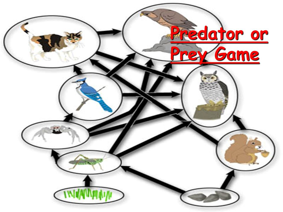 FOOD WEB...  Interconnected food chains  Shows all possible feeding relationships at each trophic level  More realistic than food chain because ani