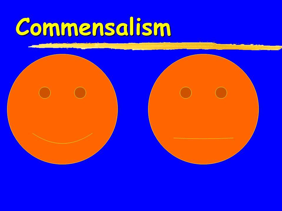 Relationships....  Symbiosis – close & permanent association between organisms Commensalism Mutualism Parasitism Parasitism