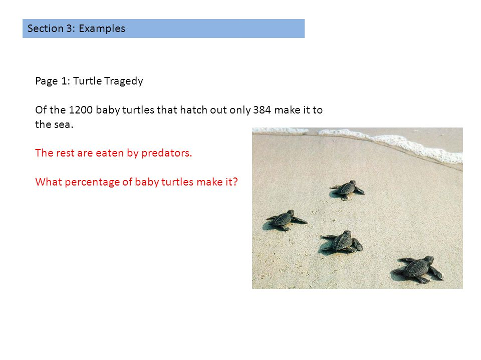 Section 3: Examples Page 1: Turtle Tragedy Of the 1200 baby turtles that hatch out only 384 make it to the sea. The rest are eaten by predators. What