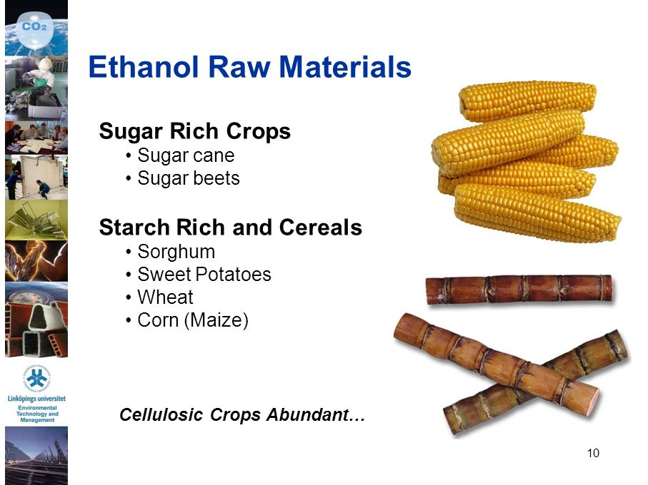 10 Sugar Rich Crops Sugar cane Sugar beets Starch Rich and Cereals Sorghum Sweet Potatoes Wheat Corn (Maize) Ethanol Raw Materials Cellulosic Crops Ab