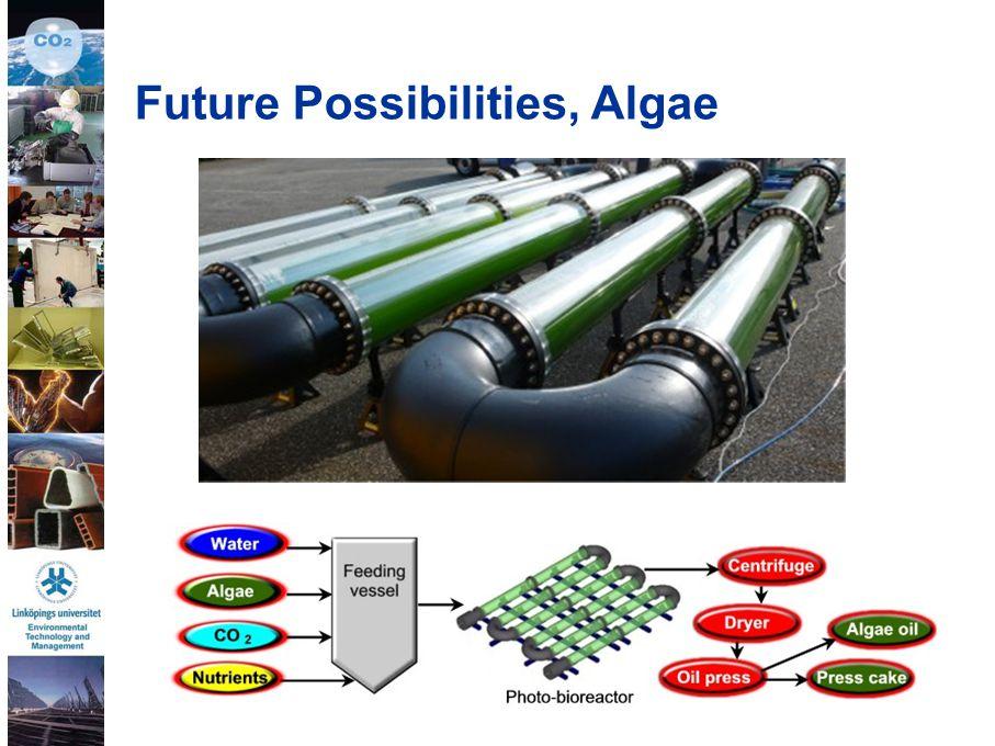 38 Future Possibilities, Algae
