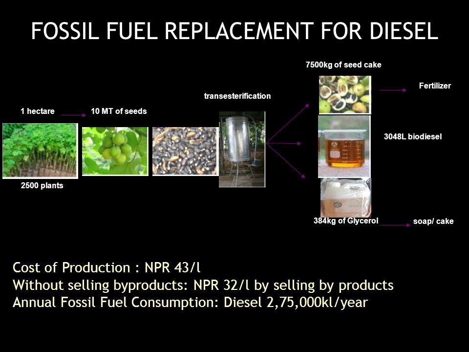 Cost of Production : NPR 43/l Without selling byproducts: NPR 32/l by selling by products Annual Fossil Fuel Consumption: Diesel 2,75,000kl/year 1 hectare10 MT of seeds 2500 plants 7500kg of seed cake 3048L biodiesel Fertilizer 384kg of Glycerol soap/ cake transesterification FOSSIL FUEL REPLACEMENT FOR DIESEL