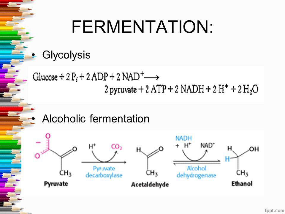 FERMENTATION: Glycolysis h Alcoholic fermentation