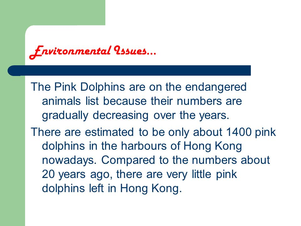 Environmental Issues… The Pink Dolphins are on the endangered animals list because their numbers are gradually decreasing over the years.