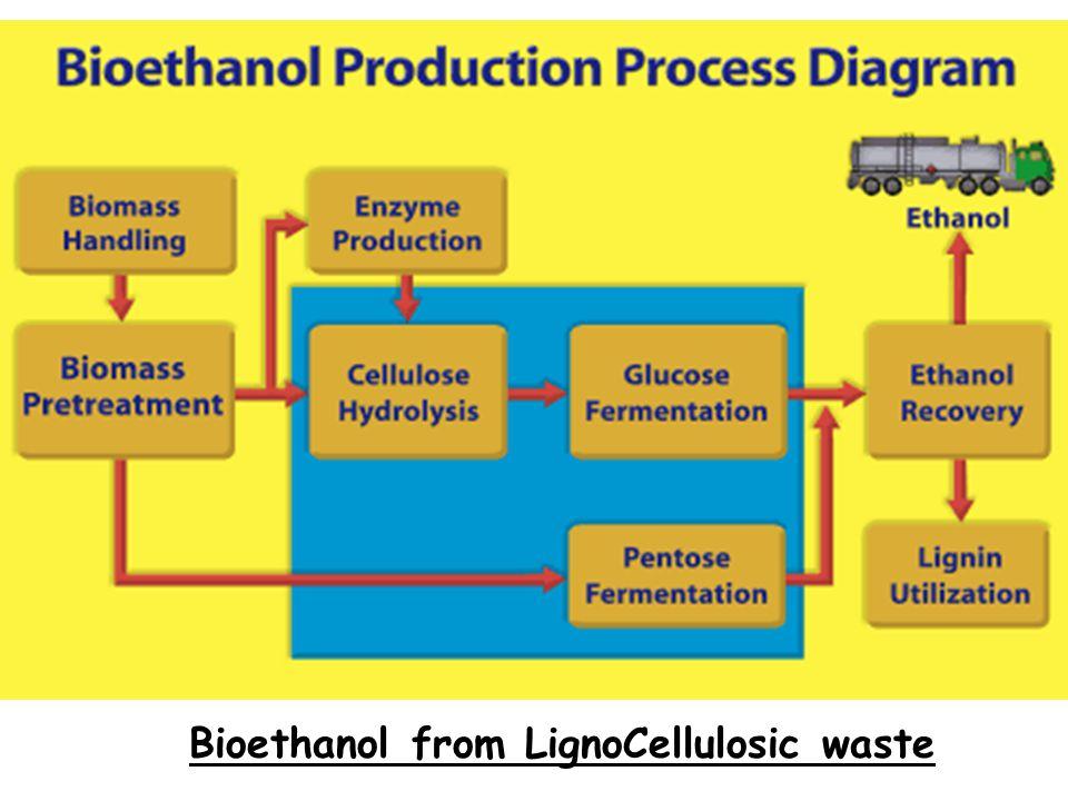 Bioethanol from LignoCellulosic waste