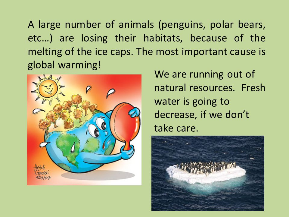 A large number of animals (penguins, polar bears, etc…) are losing their habitats, because of the melting of the ice caps.