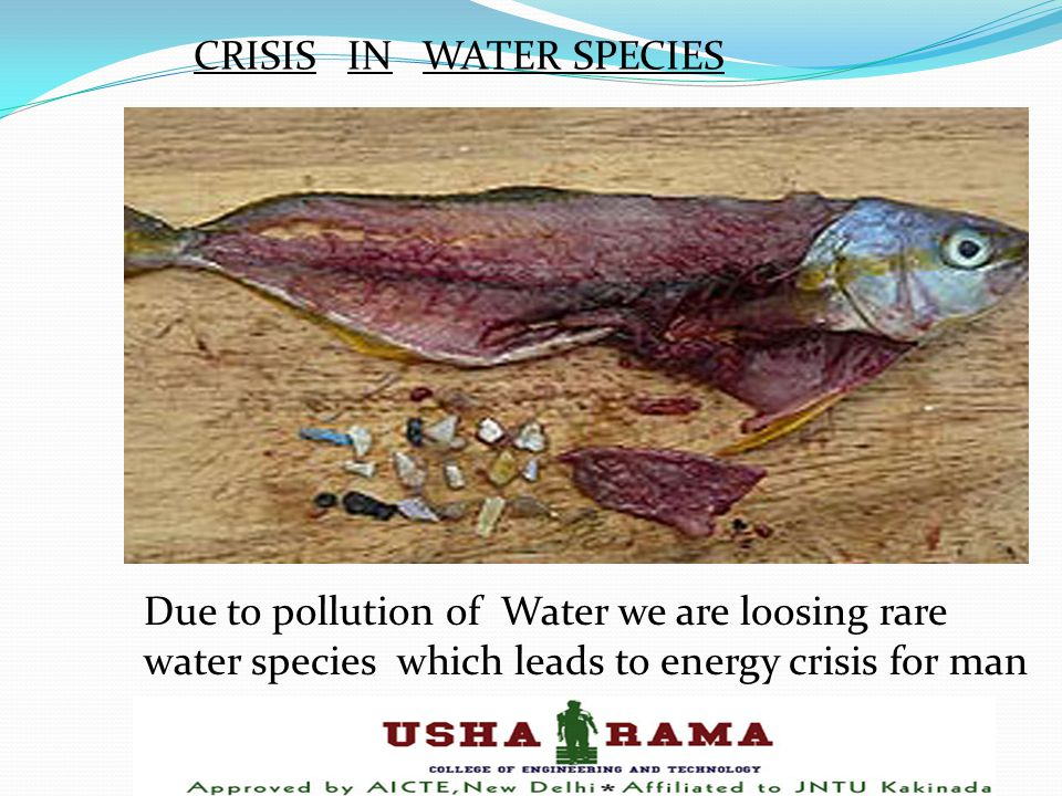 CRISIS IN WATER SPECIES Due to pollution of Water we are loosing rare water species which leads to energy crisis for man