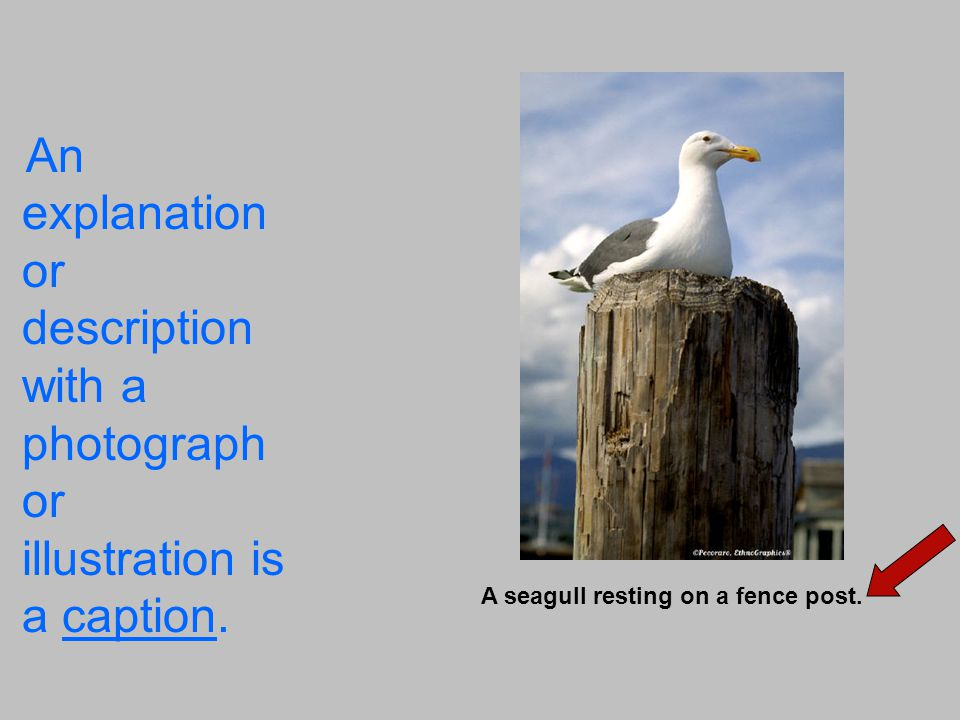 An explanation or description with a photograph or illustration is a caption.