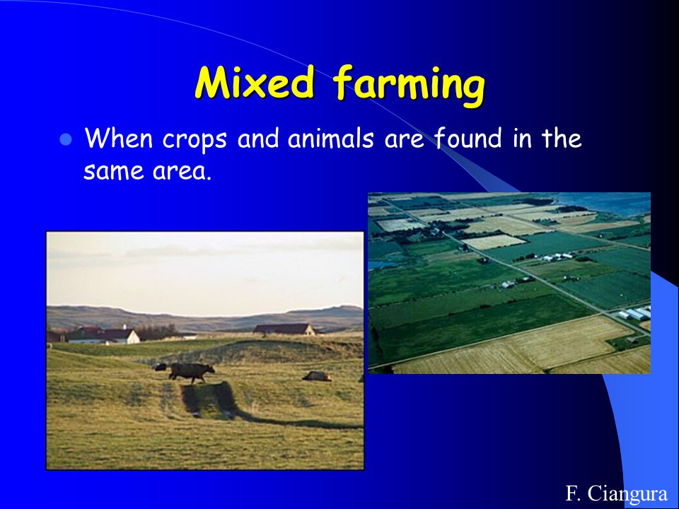 Mixed farming When crops and animals are found in the same area. F. Ciangura