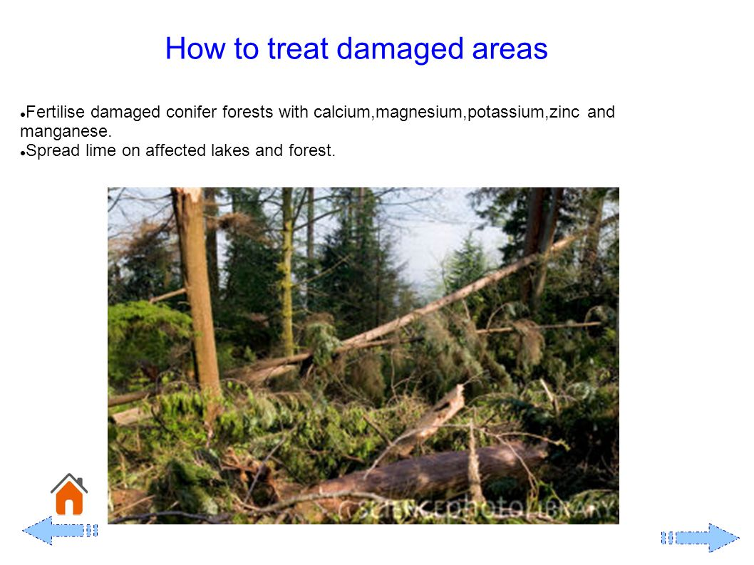 How to treat damaged areas Fertilise damaged conifer forests with calcium,magnesium,potassium,zinc and manganese.