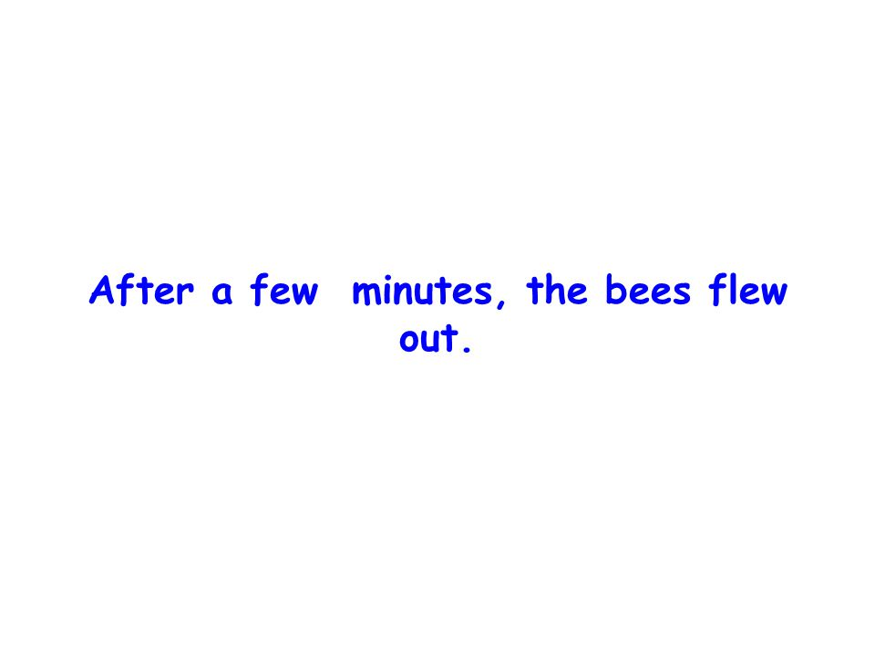 Try it now, said one bee.