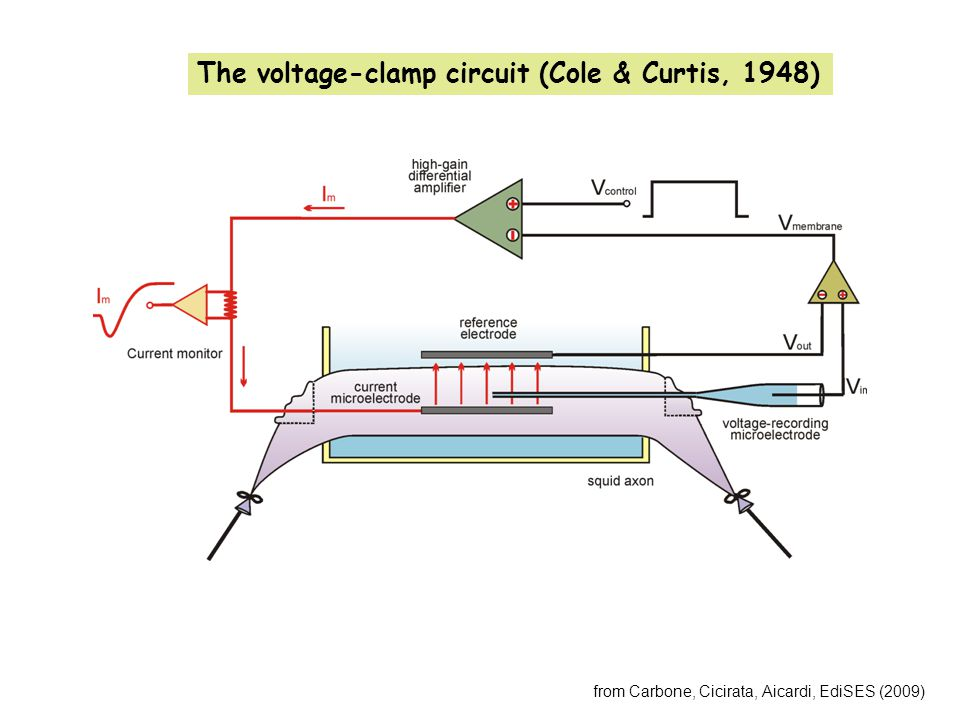 from Carbone, Cicirata, Aicardi, EdiSES (2009) The voltage-clamp circuit (Cole & Curtis, 1948)