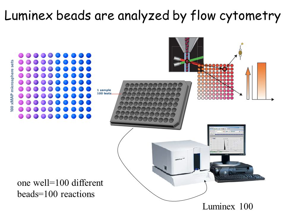 Luminex beads are analyzed by flow cytometry one well=100 different beads=100 reactions Luminex 100