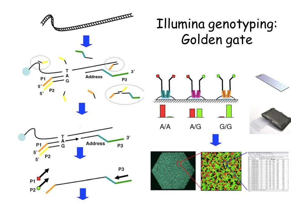 Illumina genotyping: Golden gate