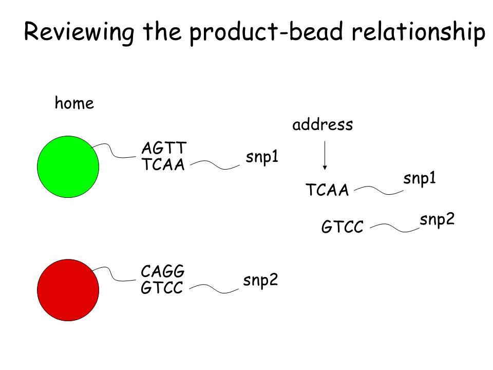 Reviewing the product-bead relationship AGTT CAGG home TCAA GTCC address TCAA GTCC snp1 snp2 snp1 snp2