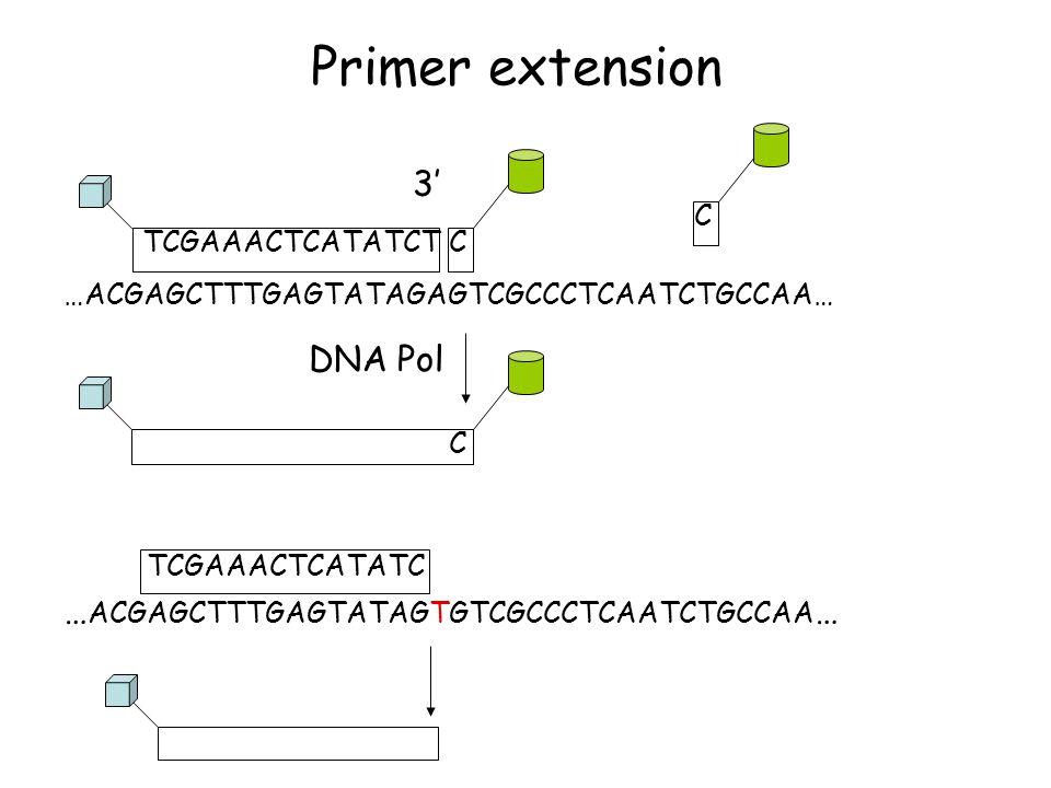 Primer extension TCGAAACTCATATCTC DNA Pol 3' … ACGAGCTTTGAGTATAGTGTCGCCCTCAATCTGCCAA … TCGAAACTCATATC …ACGAGCTTTGAGTATAGAGTCGCCCTCAATCTGCCAA… C C