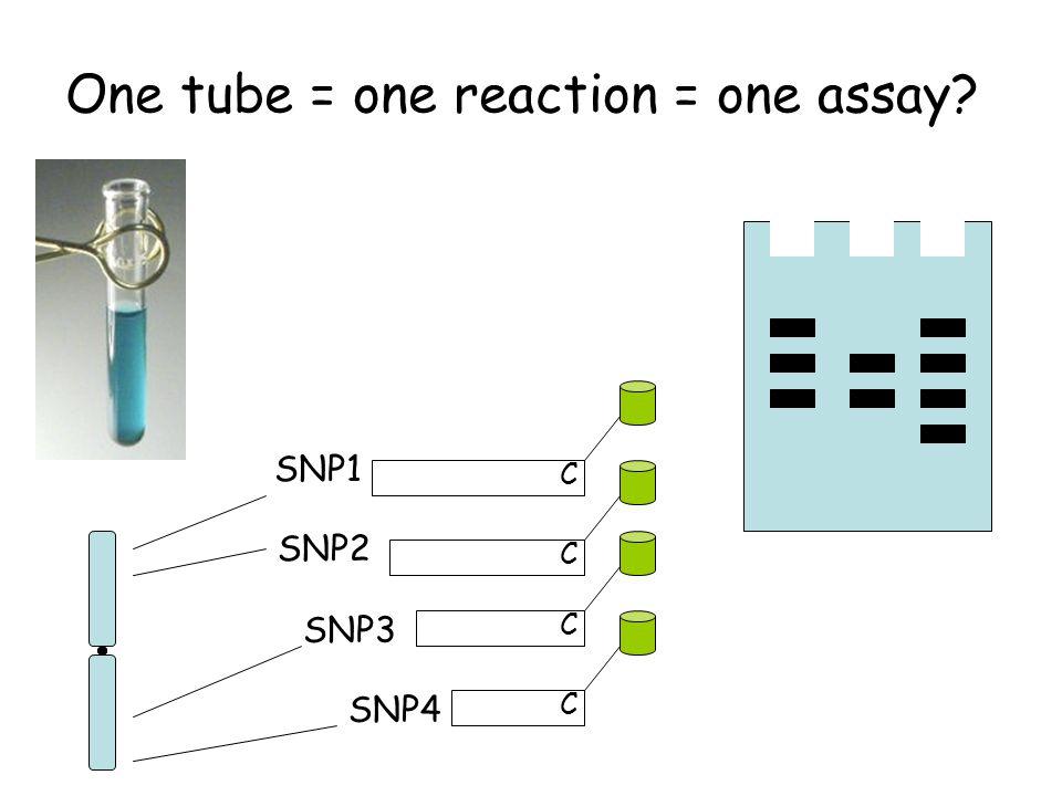 One tube = one reaction = one assay C C C C SNP1 SNP2 SNP3 SNP4