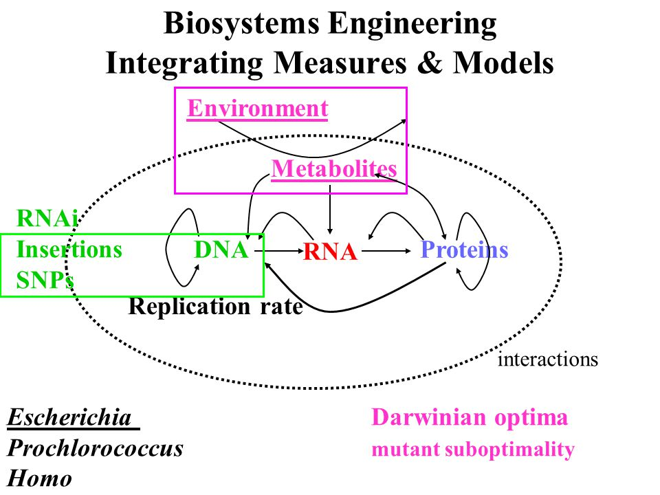 DNA RNA Proteins Metabolites Replication rate Environment Biosystems Engineering Integrating Measures & Models Escherichia Darwinian optima Prochloroc