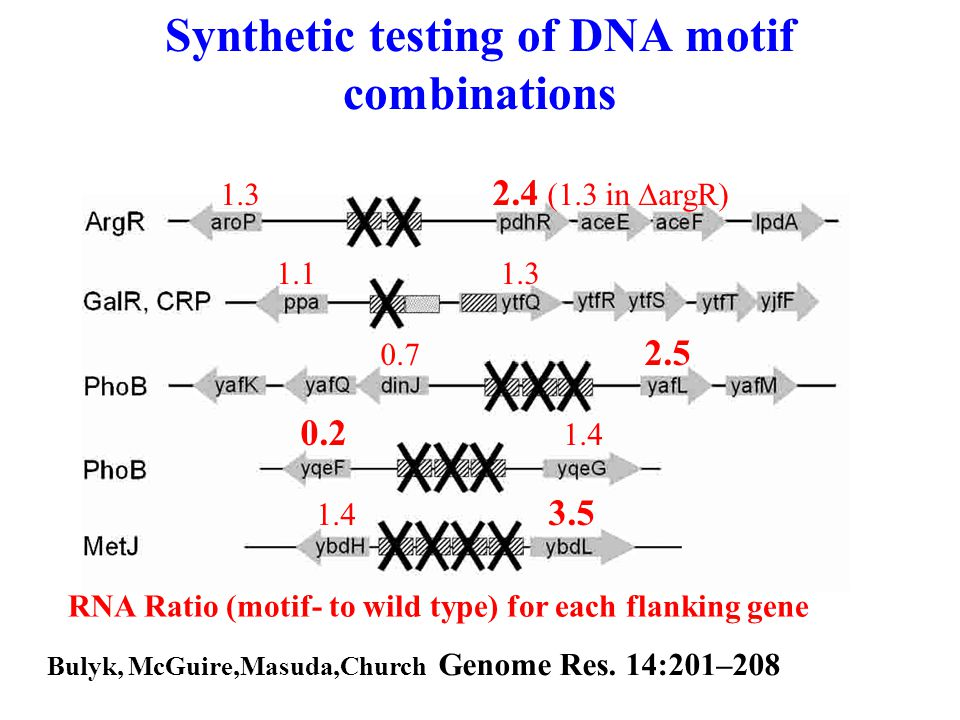 Synthetic testing of DNA motif combinations 1.3 2.4 (1.3 in  argR) 1.1 1.3 0.7 2.5 0.2 1.4 1.4 3.5 RNA Ratio (motif- to wild type) for each flanking