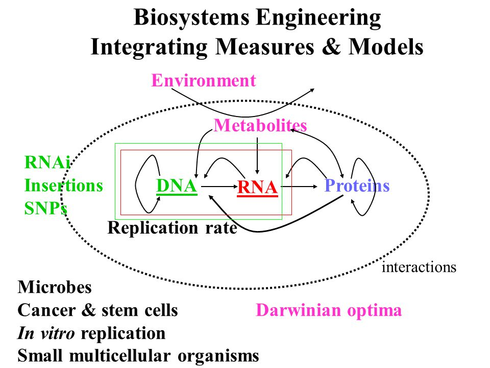 DNA RNA Proteins Metabolites Replication rate Environment Biosystems Engineering Integrating Measures & Models Microbes Cancer & stem cells Darwinian