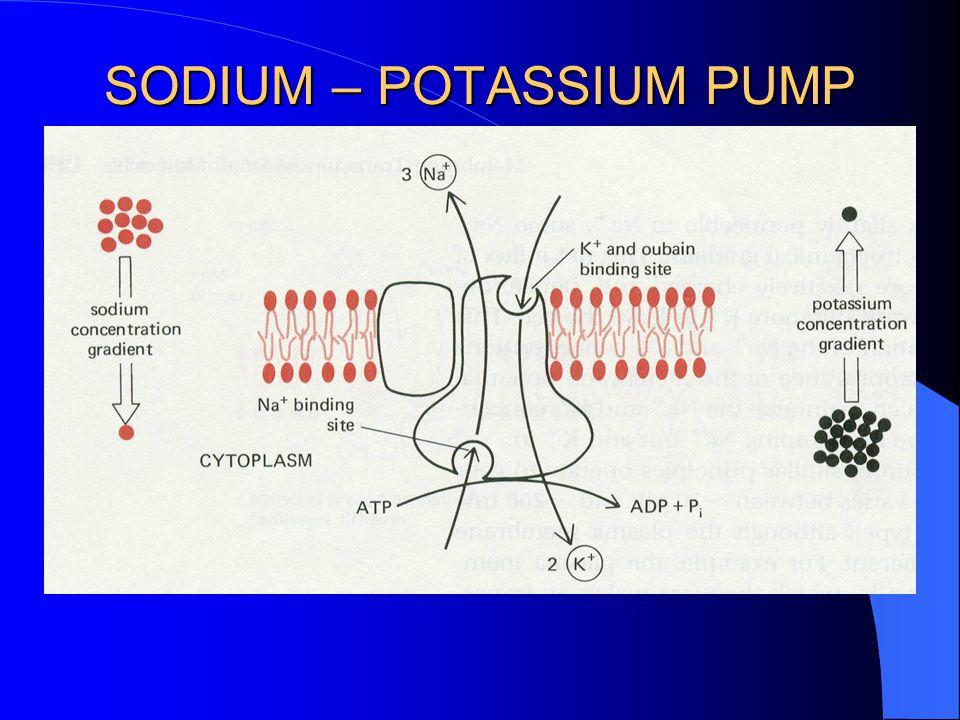 SODIUM – POTASSIUM PUMP Animation A