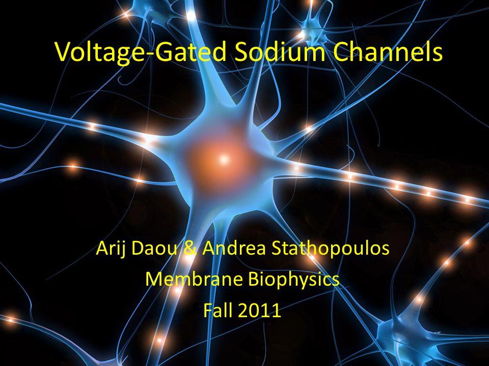 Voltage-Gated Sodium Channels Arij Daou & Andrea Stathopoulos Membrane Biophysics Fall 2011