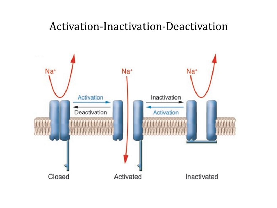 Activation-Inactivation-Deactivation