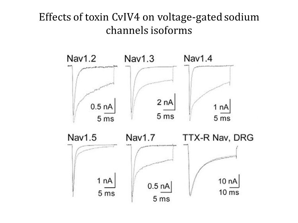 Effects of toxin CvIV4 on voltage-gated sodium channels isoforms