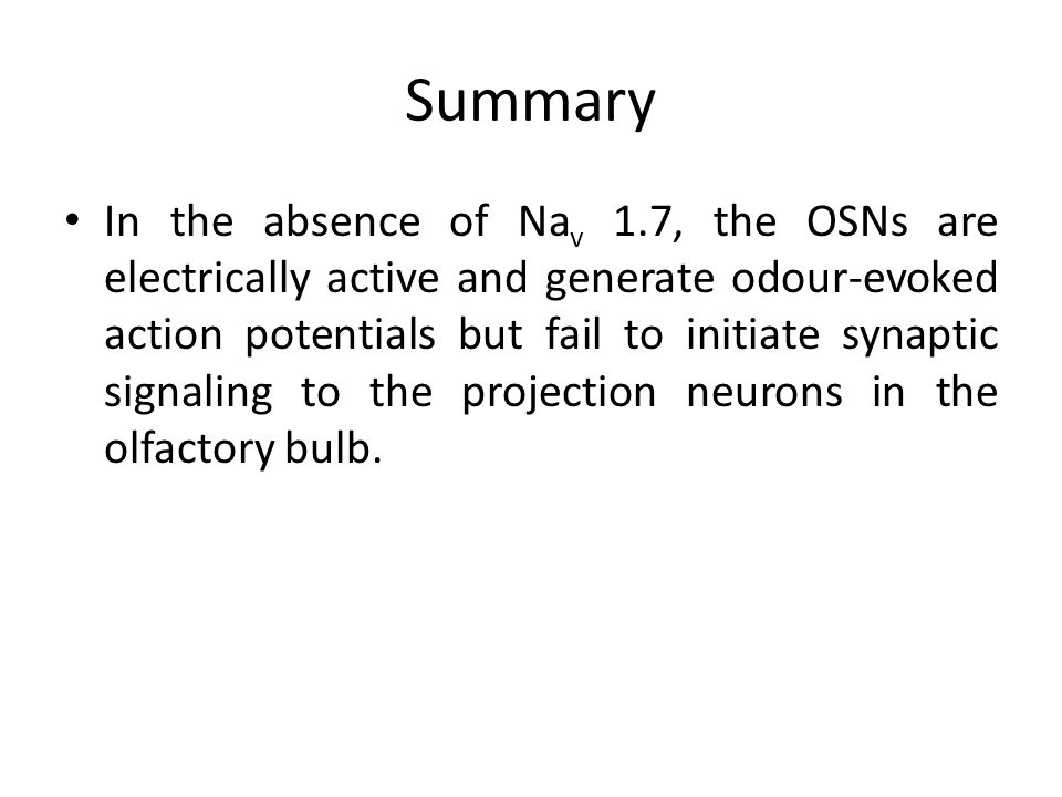 Summary In the absence of Na v 1.7, the OSNs are electrically active and generate odour-evoked action potentials but fail to initiate synaptic signaling to the projection neurons in the olfactory bulb.