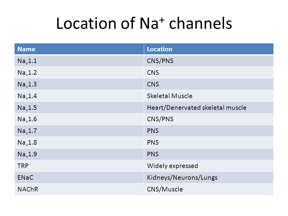 Location of Na + channels NameLocation Na v 1.1CNS/PNS Na v 1.2CNS Na v 1.3CNS Na v 1.4Skeletal Muscle Na v 1.5Heart/Denervated skeletal muscle Na v 1.6CNS/PNS Na v 1.7PNS Na v 1.8PNS Na v 1.9PNS TRPWidely expressed ENaCKidneys/Neurons/Lungs NAChRCNS/Muscle