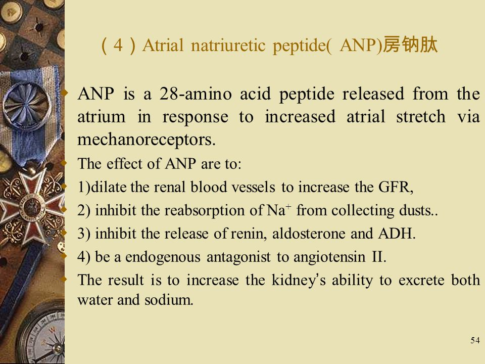 54 ( 4 ) Atrial natriuretic peptide( ANP) 房钠肽  ANP is a 28-amino acid peptide released from the atrium in response to increased atrial stretch via me