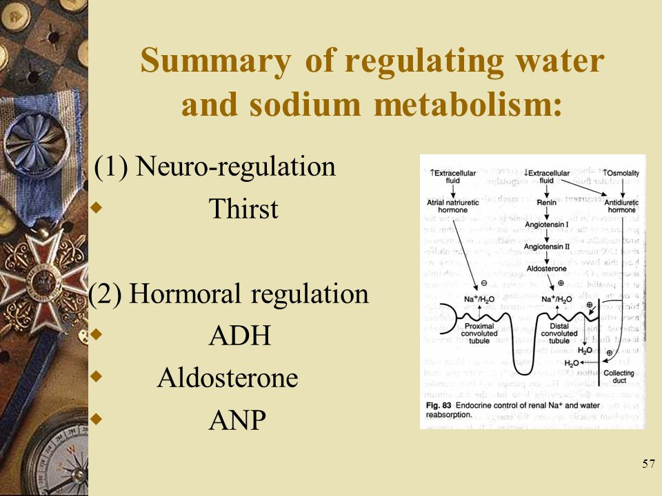 57 Summary of regulating water and sodium metabolism: (1) Neuro-regulation  Thirst (2) Hormoral regulation  ADH  Aldosterone  ANP