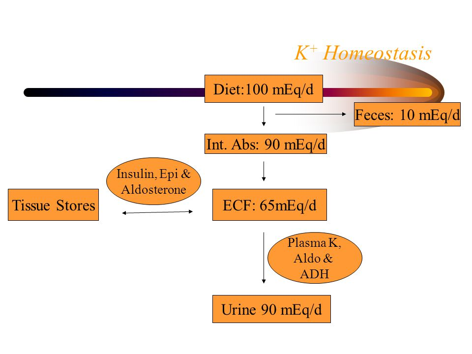 K + Homeostasis Diet:100 mEq/d Int.