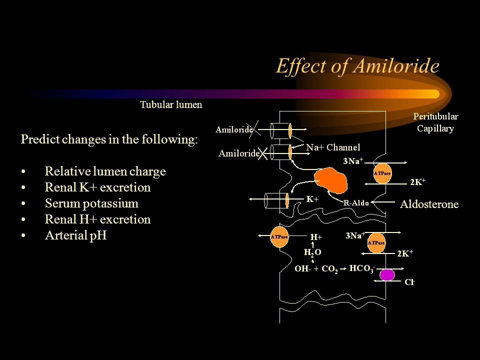 Effect of Amiloride Predict changes in the following: Relative lumen charge Renal K+ excretion Serum potassium Renal H+ excretion Arterial pH Aldosterone Tubular lumen