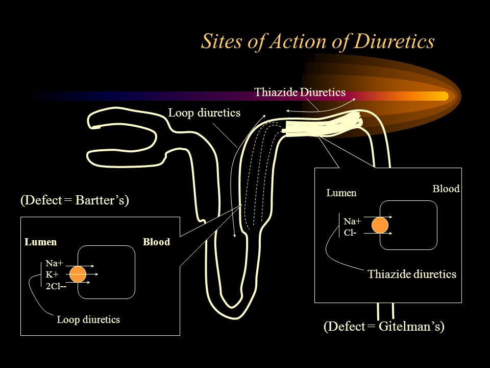 Thiazide Diuretics Loop diuretics Na+ K+ 2Cl-- BloodLumen Loop diuretics Na+ Cl- Thiazide diuretics Sites of Action of Diuretics Lumen Blood (Defect = Bartter's) (Defect = Gitelman's)