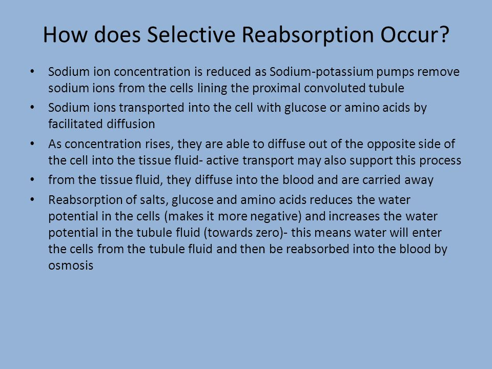 Water Reabsorption After selective reabsorption in the proximal convoluted tubule, the loop of Henle creates a low (very negative) water potential in the medulla to ensure more water is reabsorbed from the collecting duct