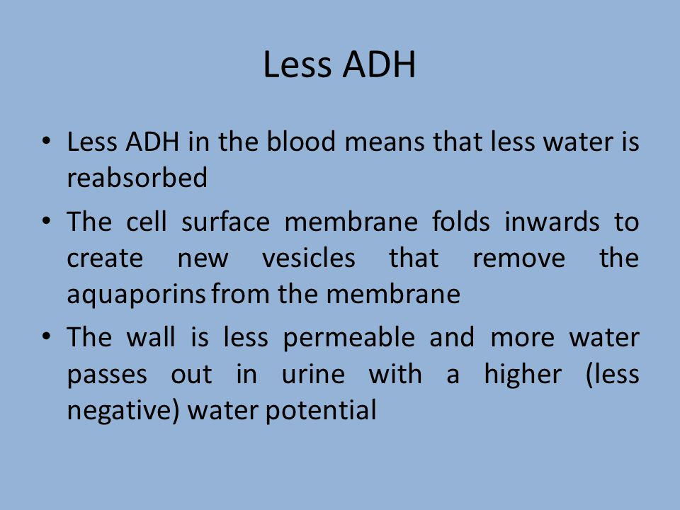 Adjusting the Concentration of ADH Osmoreceptors in the Hypothalalmus monitor the blood's water potential When the water potential is low, these cells lose water by osmosis and shrink, stimulating Neurosecretory cells (specialised nerve cells) Neurosecretory cells produce ADH in their cell body, which flows down the axon to the terminal bulb in the posterior pituitary gland where it is stored until needed