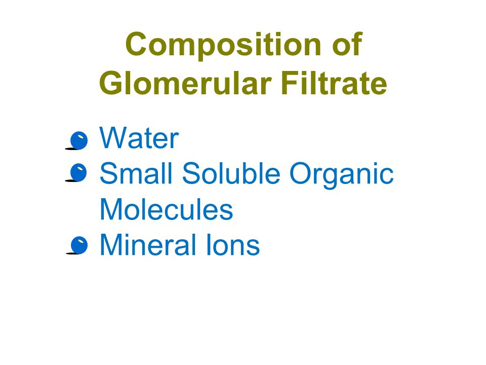 Boman's Capsule filtration occurs as blood pressure in the capillaries of the glomerulus forces filtrate into Bowman's capsule the process is passive (diffusion) the filtrate includes: water, salts, bicarbonate (HCO 3 – ), H +, urea, glucose, amino acids