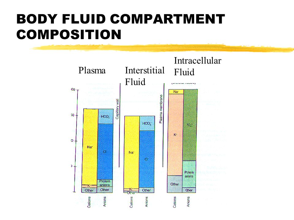 BODY FLUID COMPARTMENT COMPOSITION PlasmaInterstitial Fluid Intracellular Fluid