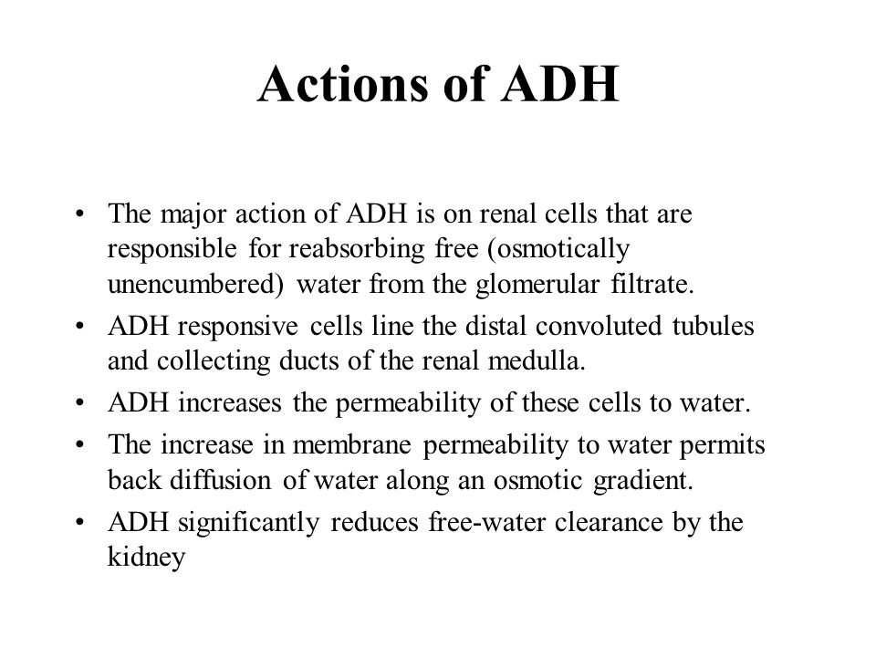 Actions of ADH The major action of ADH is on renal cells that are responsible for reabsorbing free (osmotically unencumbered) water from the glomerular filtrate.