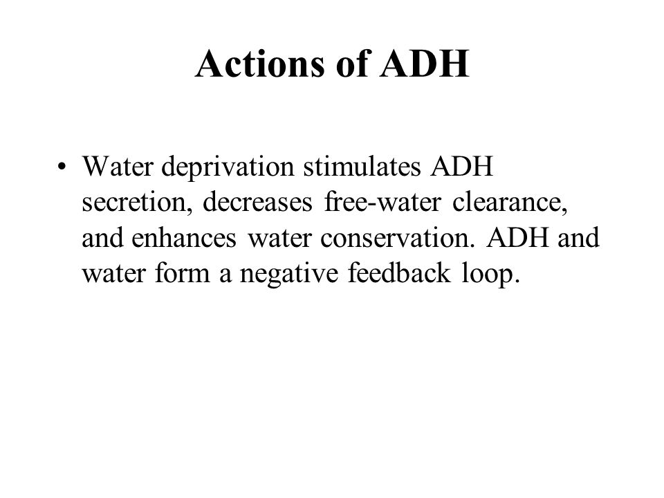 Water deprivation stimulates ADH secretion, decreases free-water clearance, and enhances water conservation.