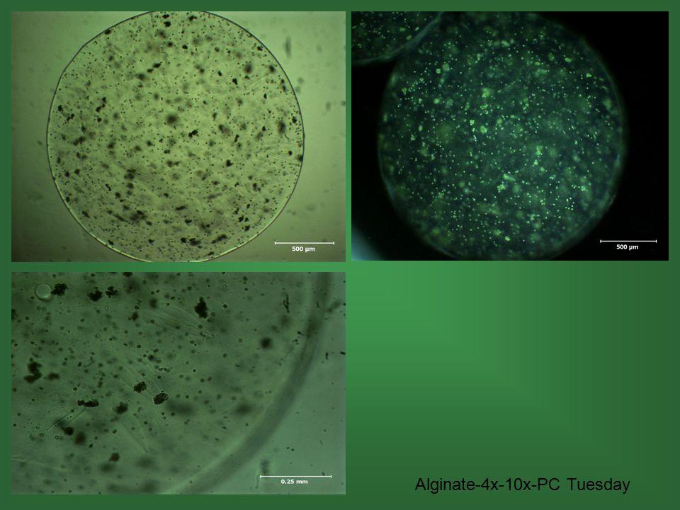 Alginate-4x-10x-PC Tuesday